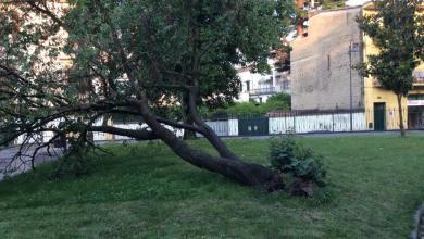Photo of Nola – Alberi villa comunale, questione ancora aperta