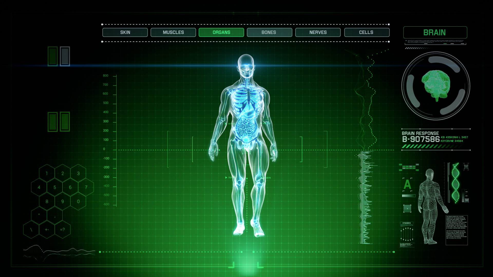 Best 3d Hologram Wallpaper Futuristic Interface Display Of Full Body Scan With Human