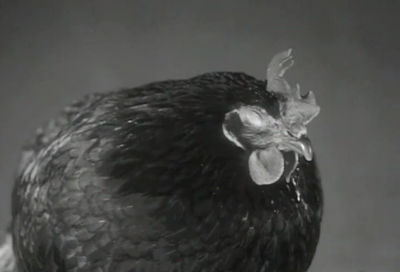 Aaron Rose: Chicken Screen Tests