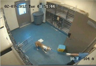 Scared dog dragged at MAS