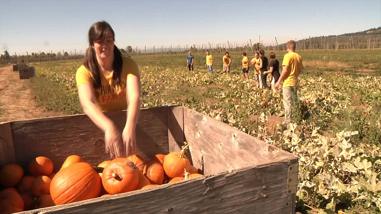 Pumpkin Harvest Video