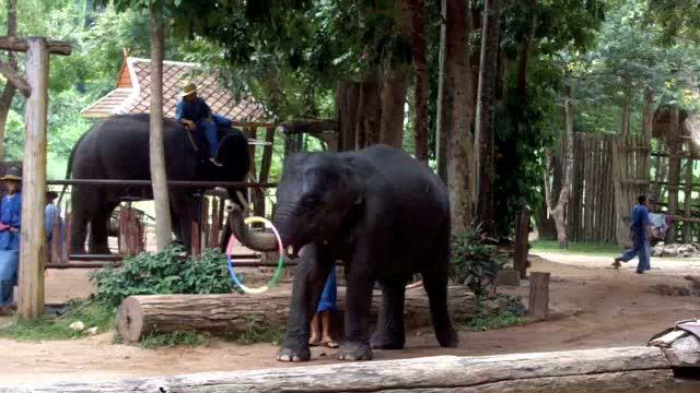 Elephant spinning hoop