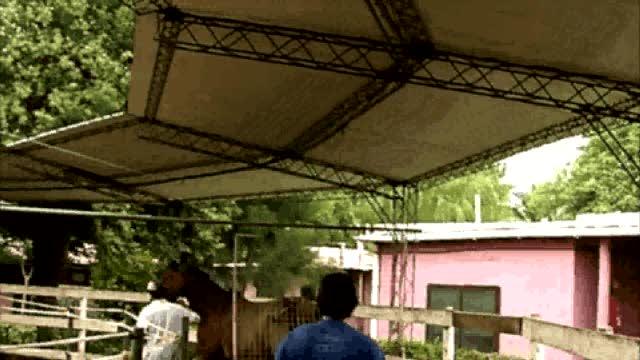 minou-apolonia-caminador1