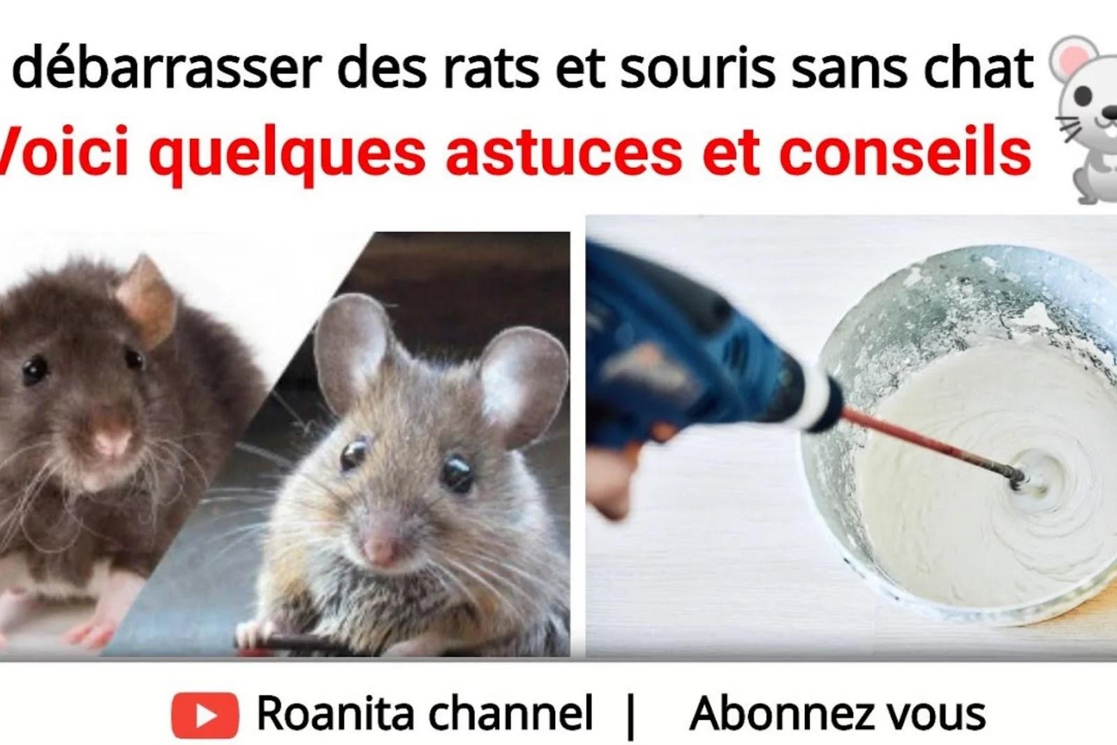 Se débarrasser des rats et souris sans chat: astuces et conseils
