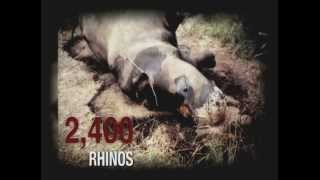South Africa: Rhinos Under Threat