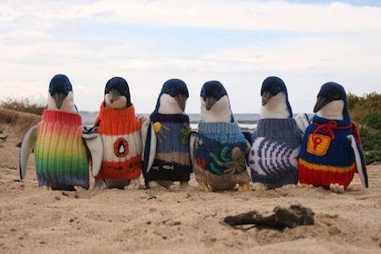 These penguins look well suited for a winter in NYC