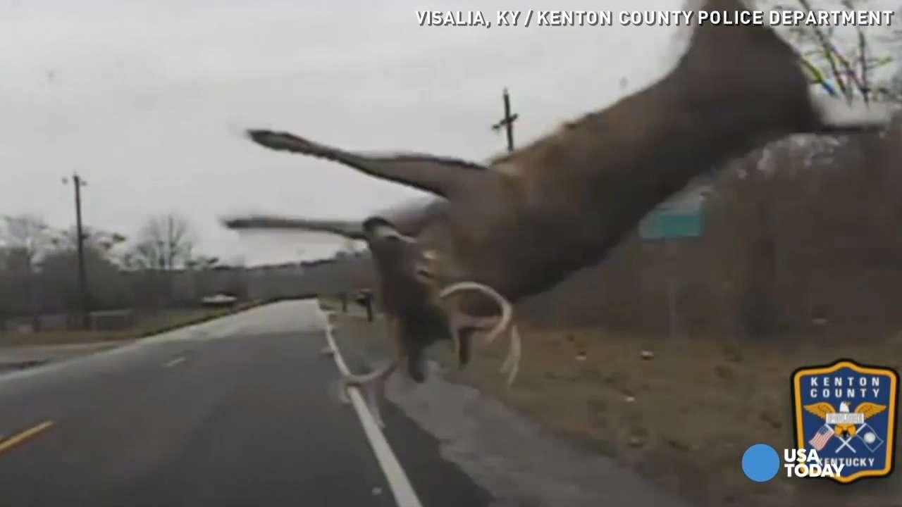 deer flips in air