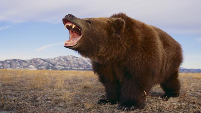 bear market primer what