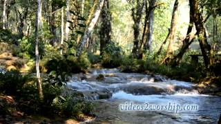 River In The Forest Motion Loop