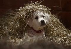 "Featured Vid #13 – Budweiser ""Lost Dog"""
