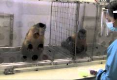 Featured Vid #347 – Two Monkeys Were Paid Unequally