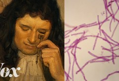 Featured Vid #418 – What It Took To Discover Bacteria In The 1670s