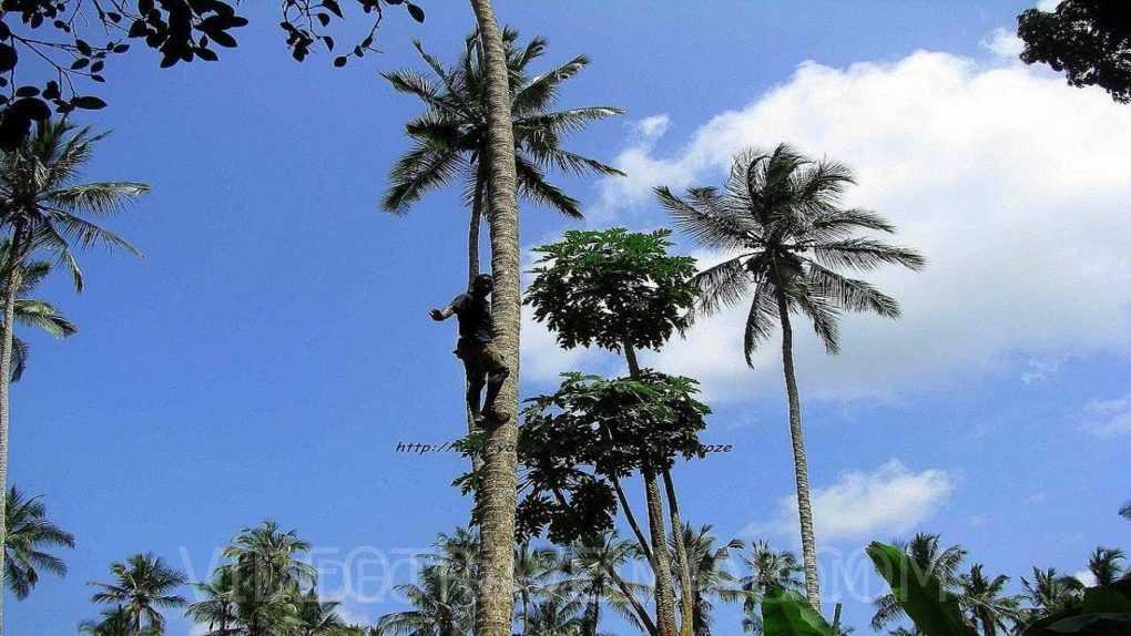 Hakuna Matata Witamy na Zanzibarze » Jack Podróżnik