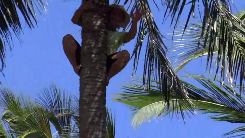 Wietnamczyk na drzewie 2