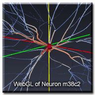 WebGLNeuron_m38c2_wtext
