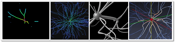 sc_VizProcess_neuron_img00header
