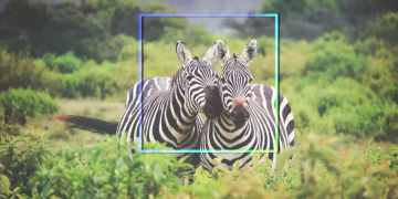 The world's animals are getting their very own Facebook, VidLyf.com