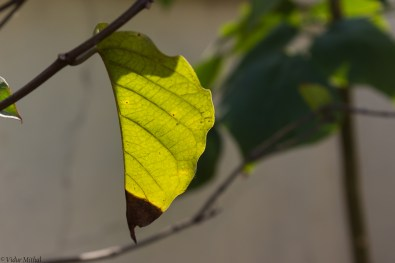 Photograph of a Leaf