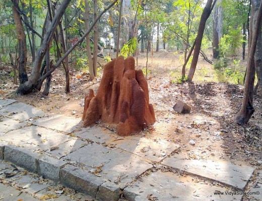 lakshmi vidya sury