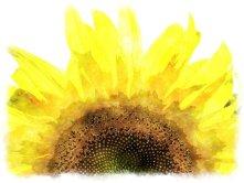 sun-flower-fabiovisentindotcom