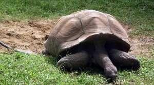 #AtoZChallenge Hyd Zoo