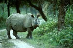 Zoo Zen Assam