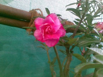 Vidya Sury Gita Garden (5)