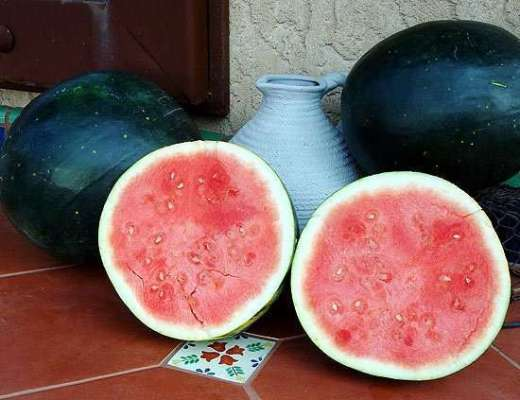 you know it is summer when melons