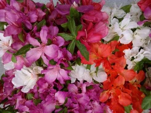 family vidya sury flowers (1)