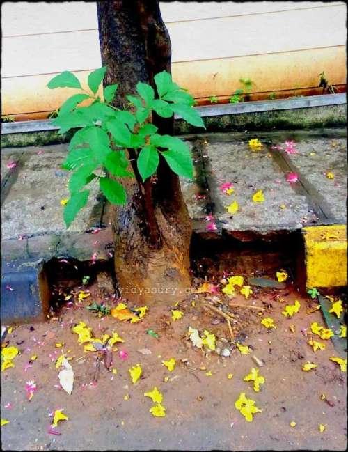 vidya sury change roadside