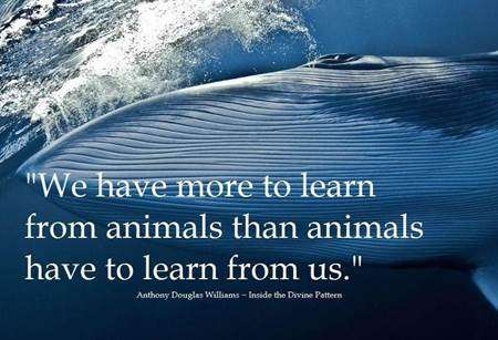 We have more to learn from animals Vidya Sury