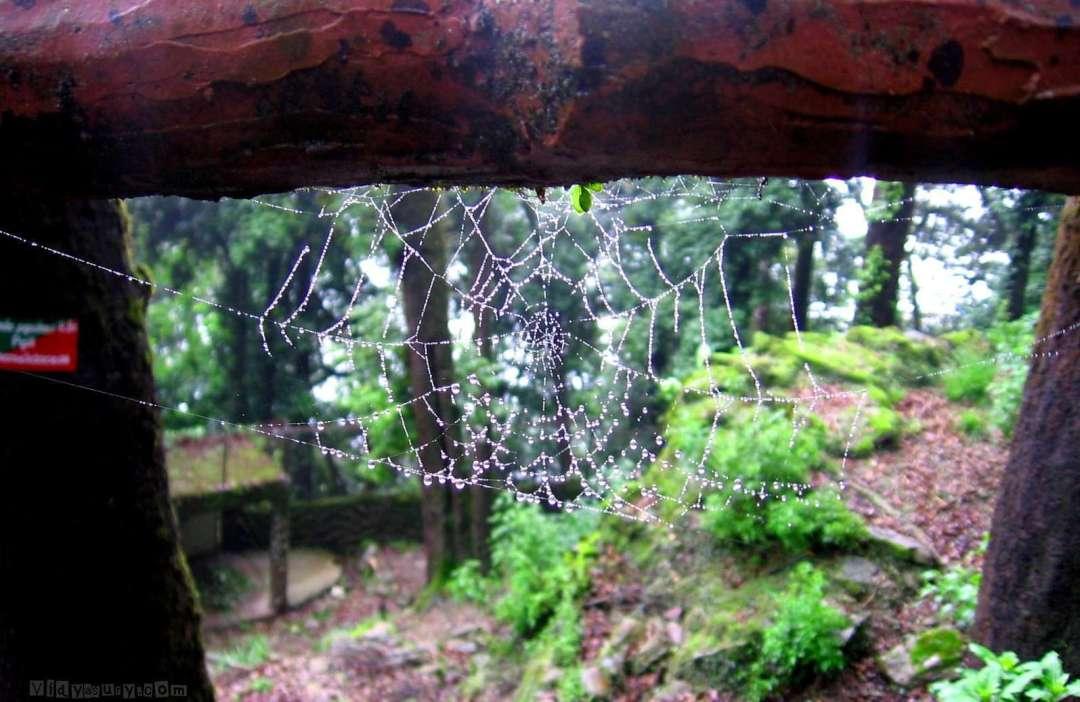 Rain drops keep falling on my head. Vidya Sury