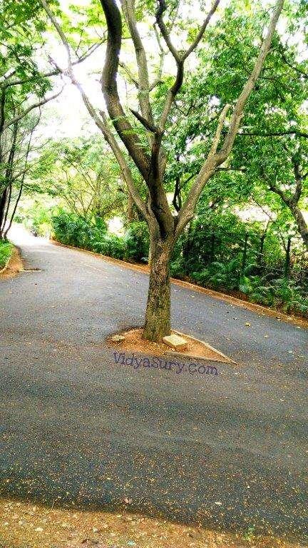 My impromptu date with nature Vidya Sury