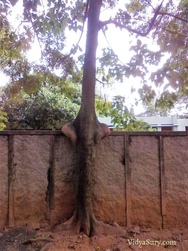The friendly tree #ThursdayTreeLove #mindfulness