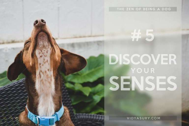 Lesson 5 The Zen of being more dog--It's about the dog. The dog book blog tour #Zen #dogs