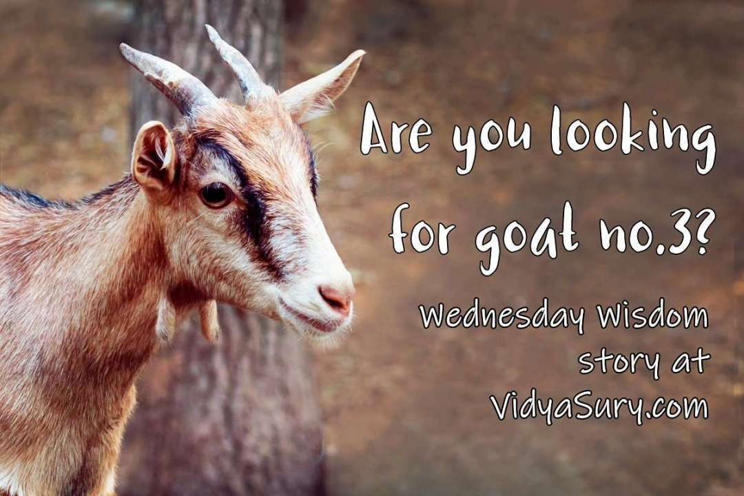 Are you looking for goat number 3 Wednesday Wisdom