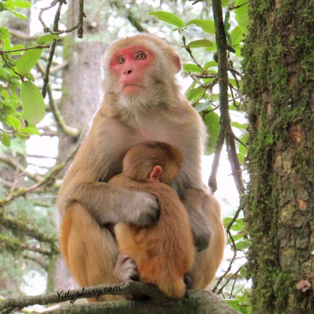 Monkey Business Kufri