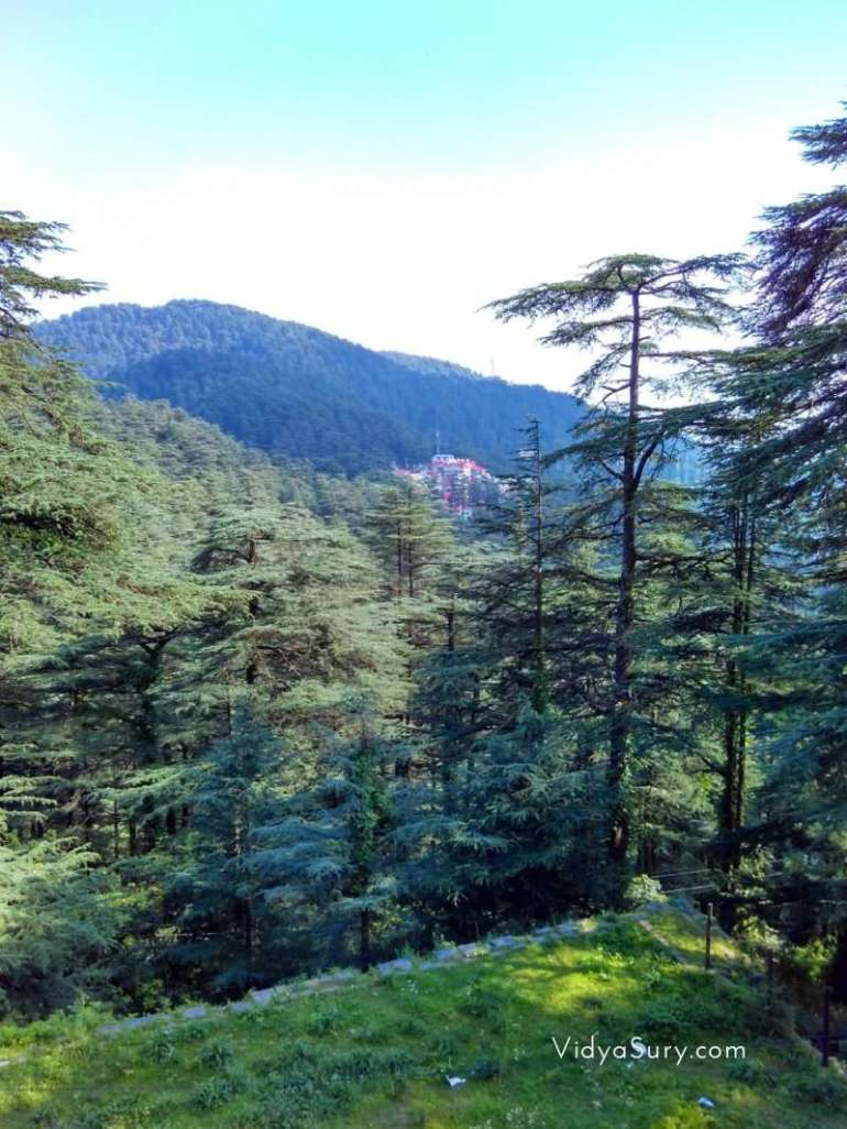 View from Chail Himachal Pradesh