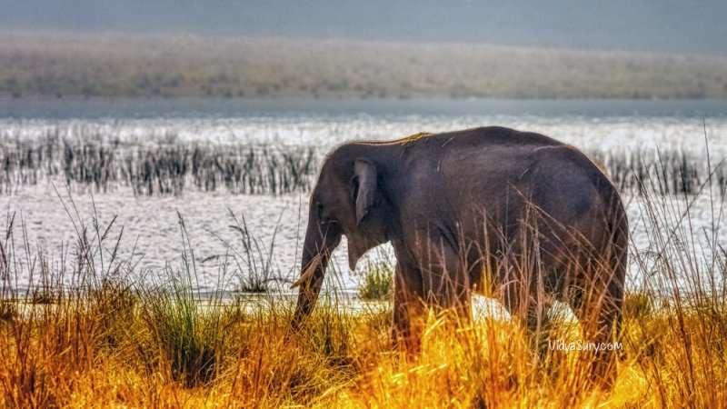 Elephant at Jim Corbett National Park