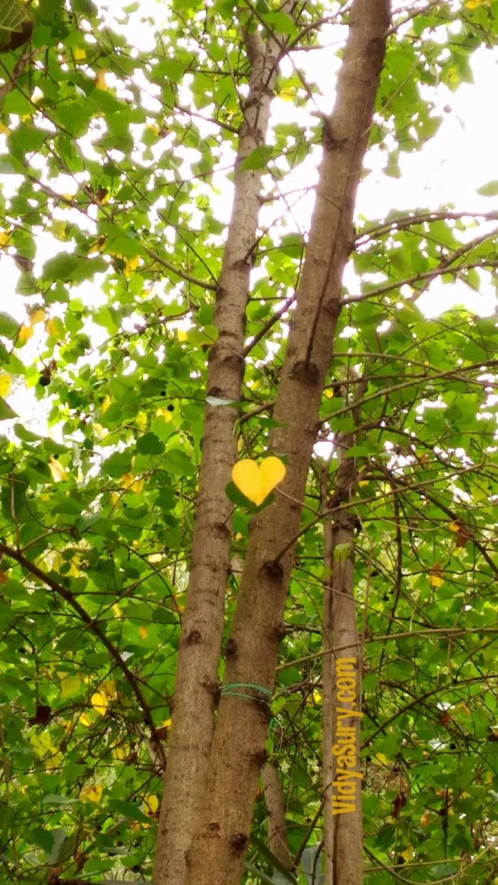 State of my heart Thursday Tree Love