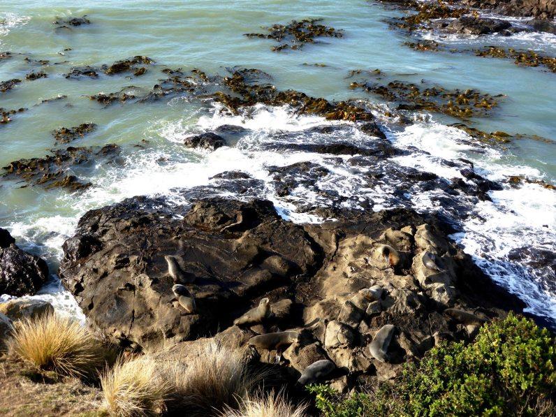 Oamaru-île du Sud