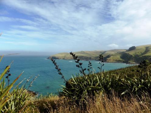 l'île du Sud-The Catlins (5)