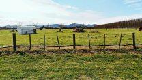 picking et pruning de kiwis-travailler l'hiver en Nouvelle Zélande