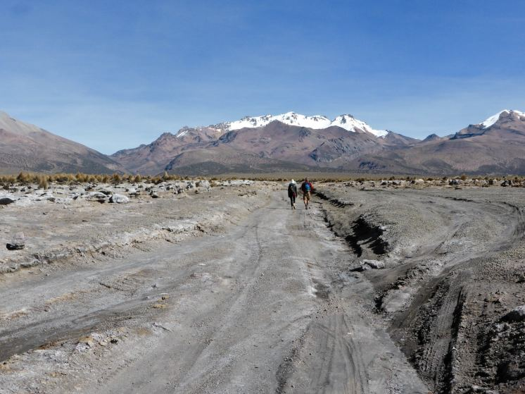 Parc National de Sajama-Bolivie (9)