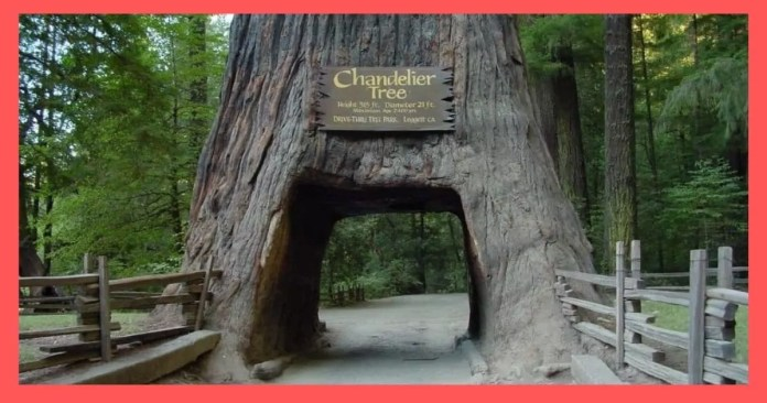 Redwood National and Stat
