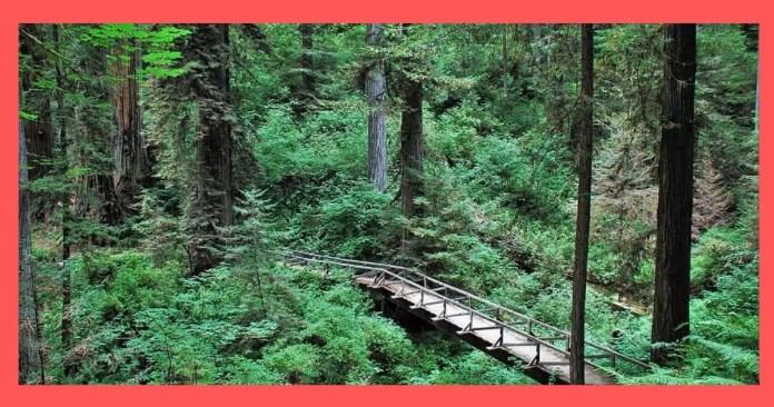 Prairie Creek Redwoods State Parks