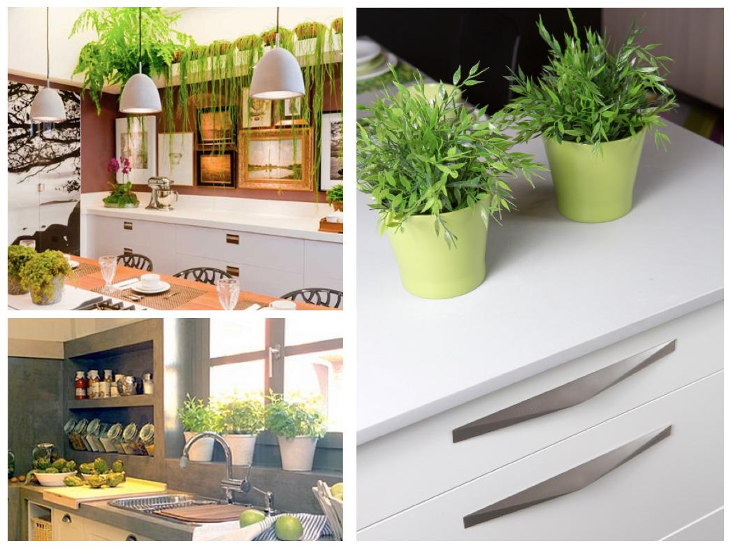 Plantas en la cocina  Plants in the kitchen  Viefe Blog