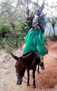 Siempre quedan las mulas para quienes no aguantaron tanto calibre