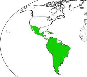 Países en los que no necesitamos visa los colombianos