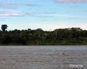 Delfines rosados en el Amazonas, Colombia